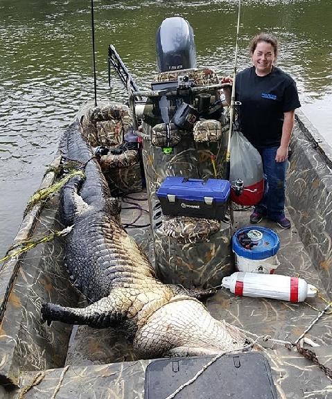 War Eagle Predator Boat | Wiringswitch.us